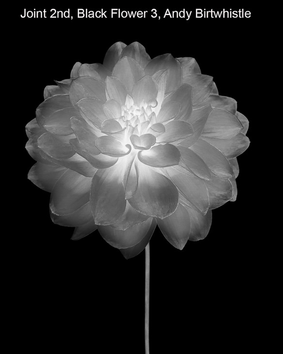 02 Black Flower 3_.jpg