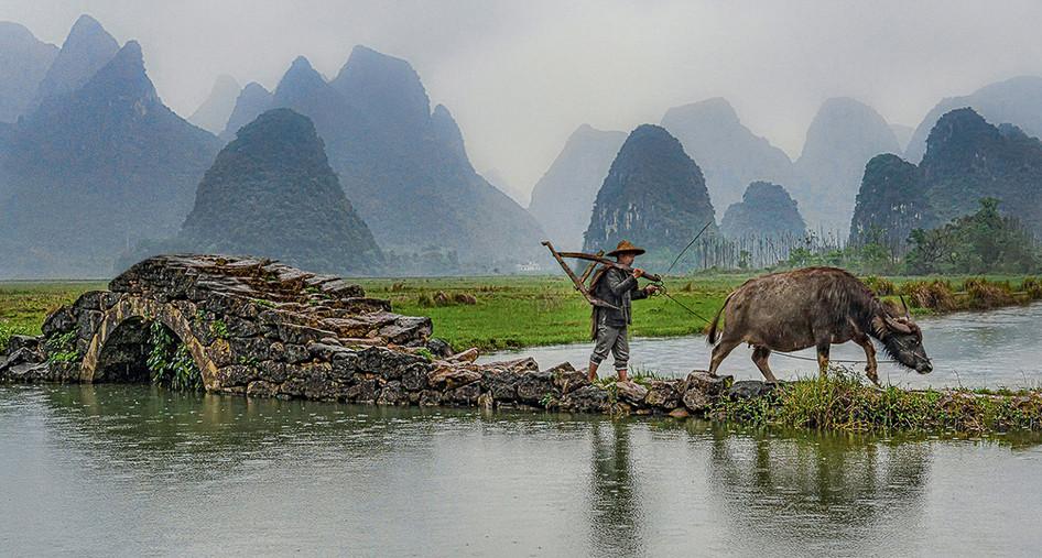 01 Rice Farmer With Water Buffalo - 21.j