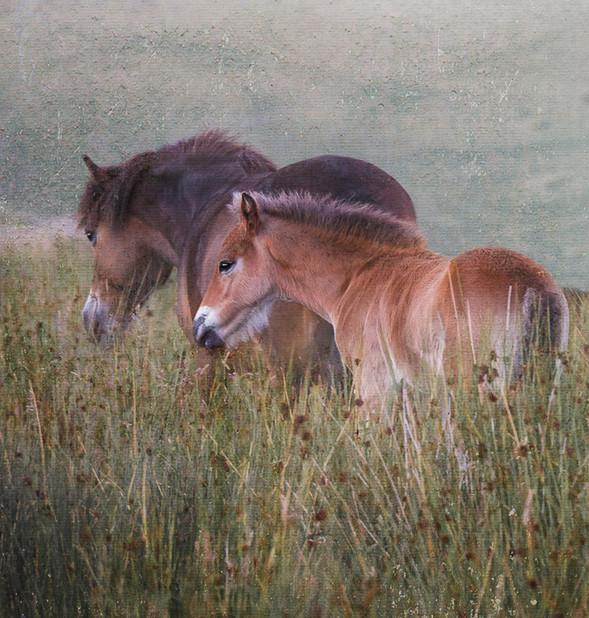 03 Exmoor Pony & Foal - 20.jpg