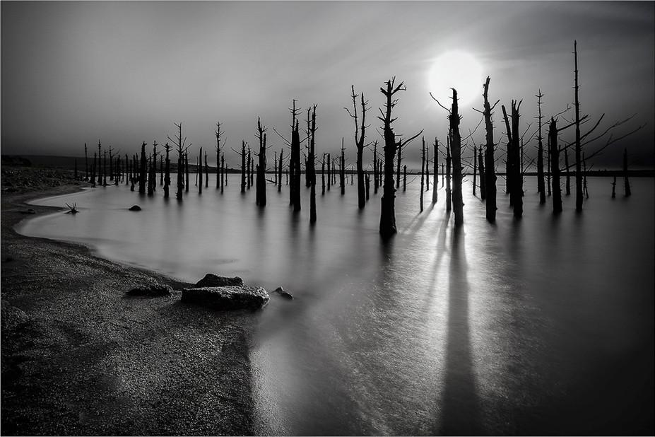09 Submerged Forest - 19.jpg