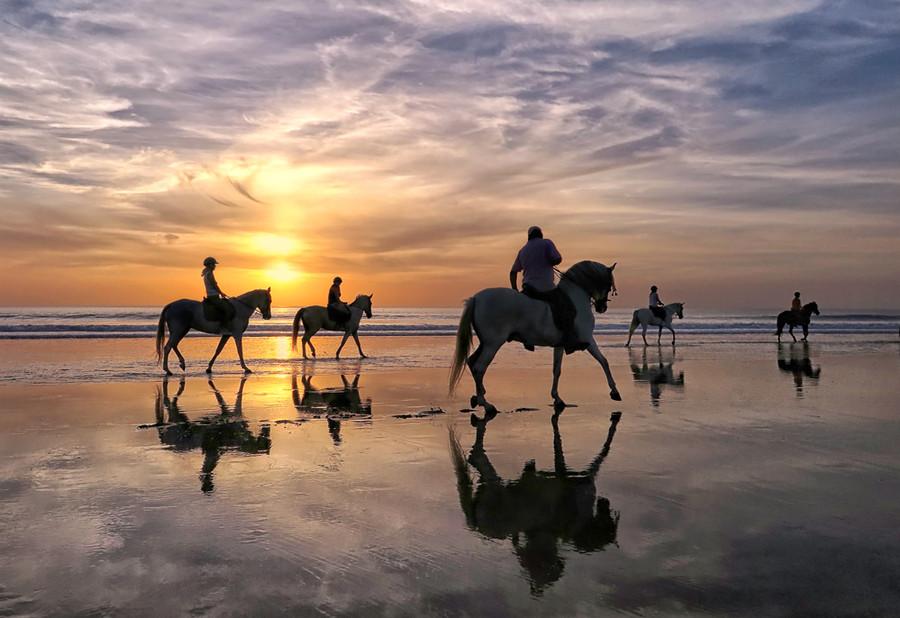 05 Sea Horses  23.jpg