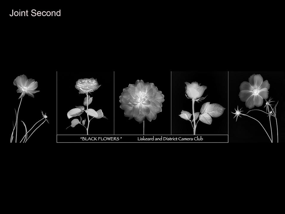 03 Blackflowers 6.jpg