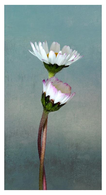 HC Togetherness-Judith Flacke-Bideford.j