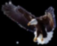 SC Consultoria Ambiental - Águia