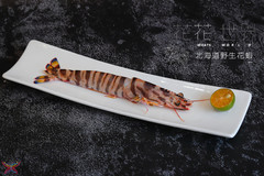 北海道野生花蝦.jpg