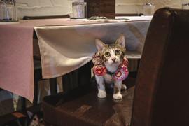 芯芙か 餐桌-寵物友善餐廳.jpg
