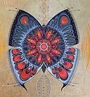 papillon de la transformation
