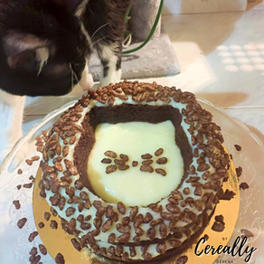 Chocolate & coconut kitty cake