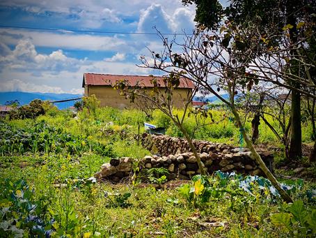 Revive los métodos de cultivo ancestral en San Joaquín
