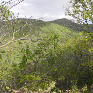 Medina Ambiental - Biodinâmica
