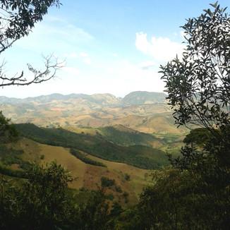 Branca Medina - Ave Lavrinha - MG