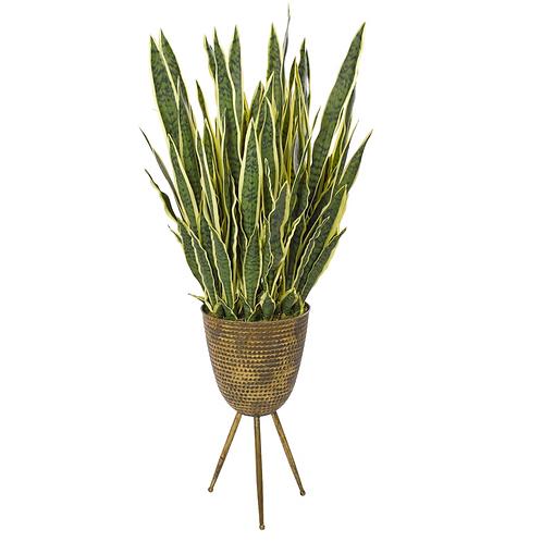 Sansevieria Plant (Yellow/Green) - Tripod Planter