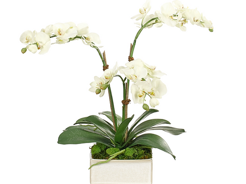 Orchid Phalaenopsis (White) - Ceramic Square Silk Arrangement