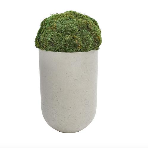 Moss Mound - Concrete Finish Planter