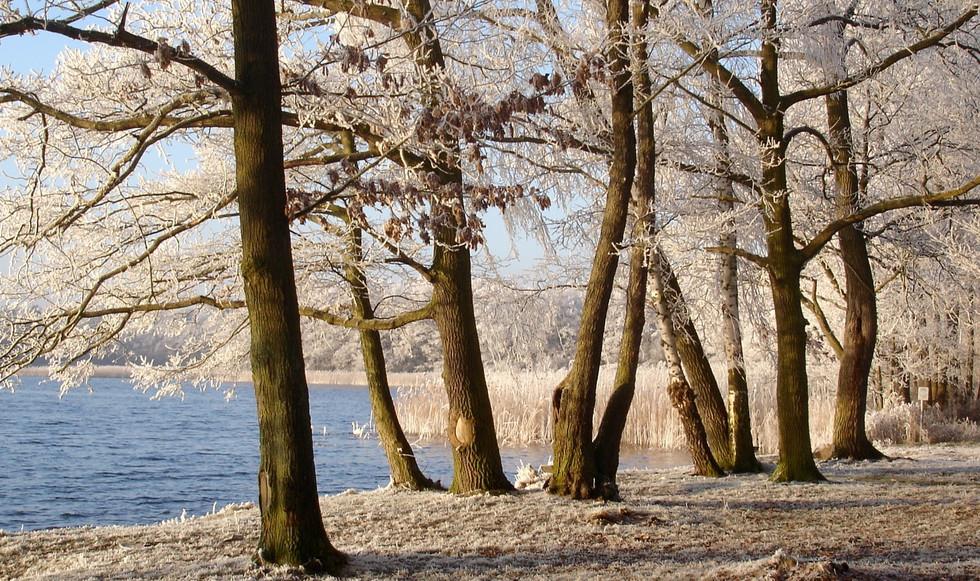 WinterNebelsee.jpg