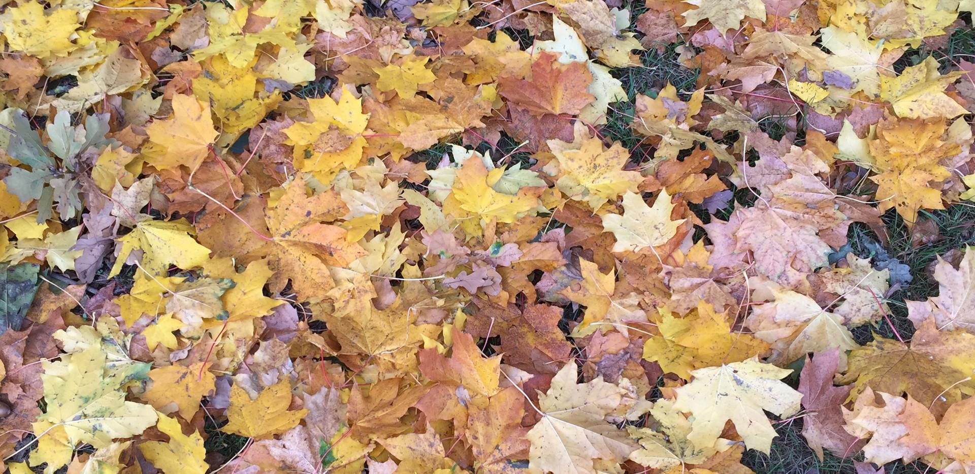 Herbstlaub.jpg