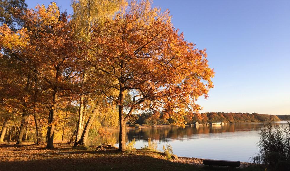 Golderner Herbst.jpg
