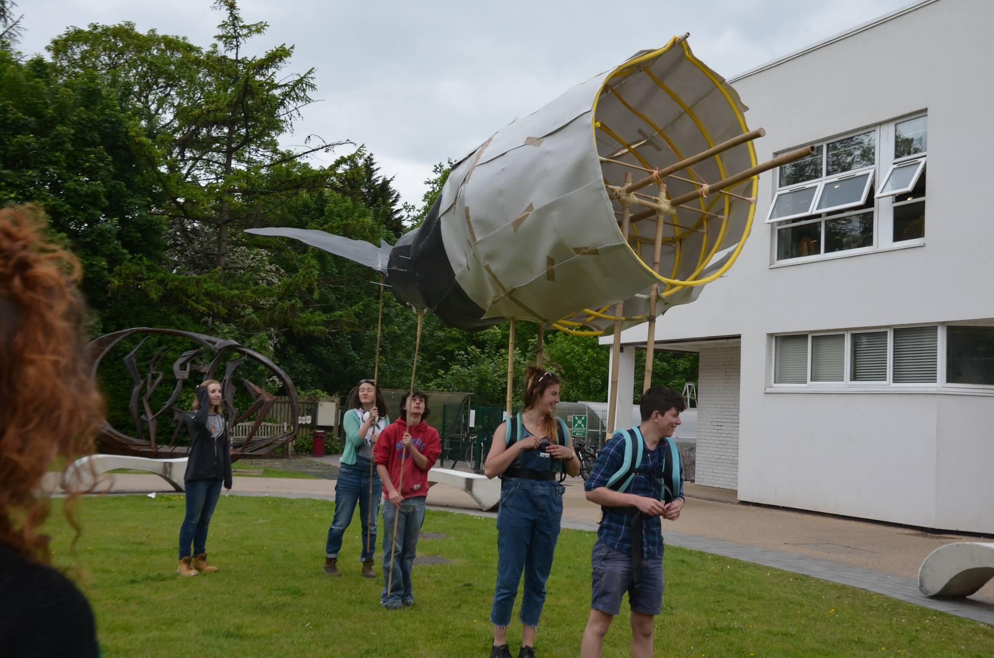Whale Process Image