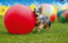 éducateur canin comprtemntalite var 83 gorges du verdon chien treibball actiité