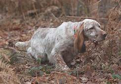 Mon chien est sur une piste , il s'éloigne ! Comment prévenir et réagir ?