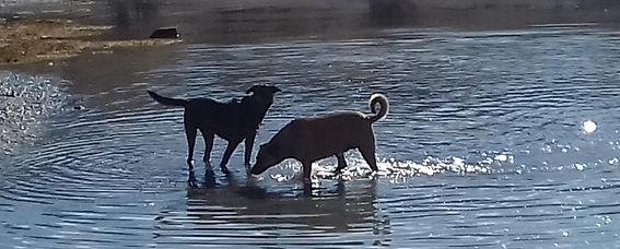 1 vie 2 chiens - éducateur canin comportementaliste tarifs haut var Gorges du Verdon