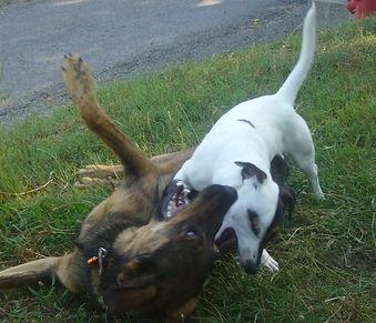 1 vie 2 chiens - éducateur canin comportementaliste contact cynologiste haut var Gorges du Verdon
