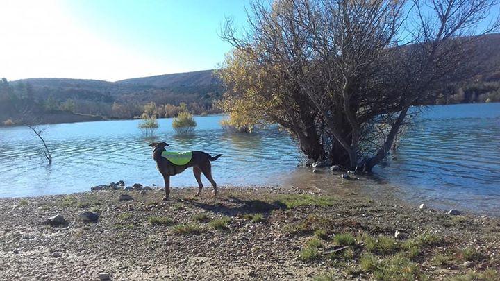 Sia , 1 vie 2 chiens , lac de Sainte Croix
