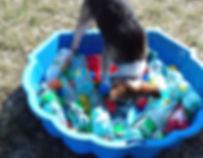 éducateu canin coportemenalistevar 83 gorges du veron à domicile chiot chien