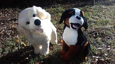 1 vie 2 chiens prévention morsures