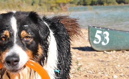 éducatrice canine comportementaliste var 83 04 chien dresseur