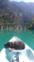 1 vie 2 chiens - éducateur canin comportementaliste canoe canin cynologiste haut var gorges du verdon