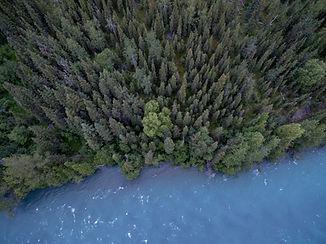 Flygfoto av en skog