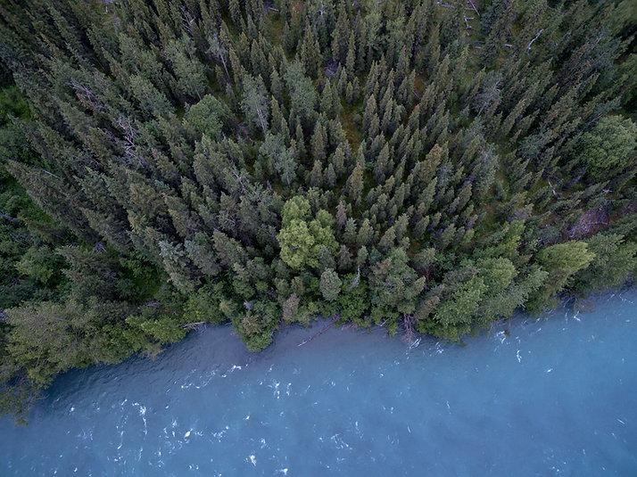 숲의 공중 사진