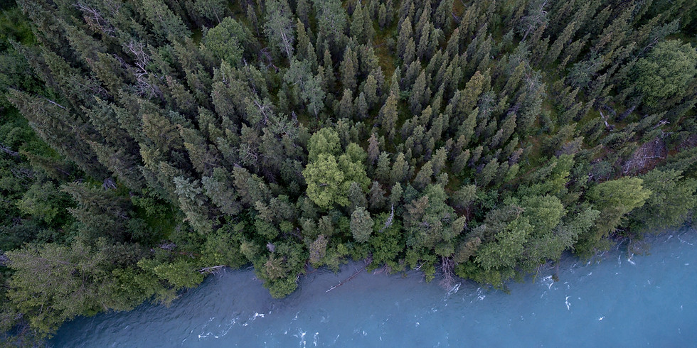The Use Of The Forest Resources In The New Era Of Uncertainty