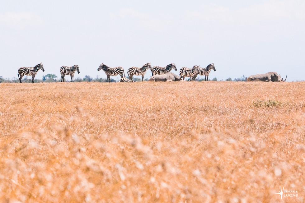Afrique-48.jpg