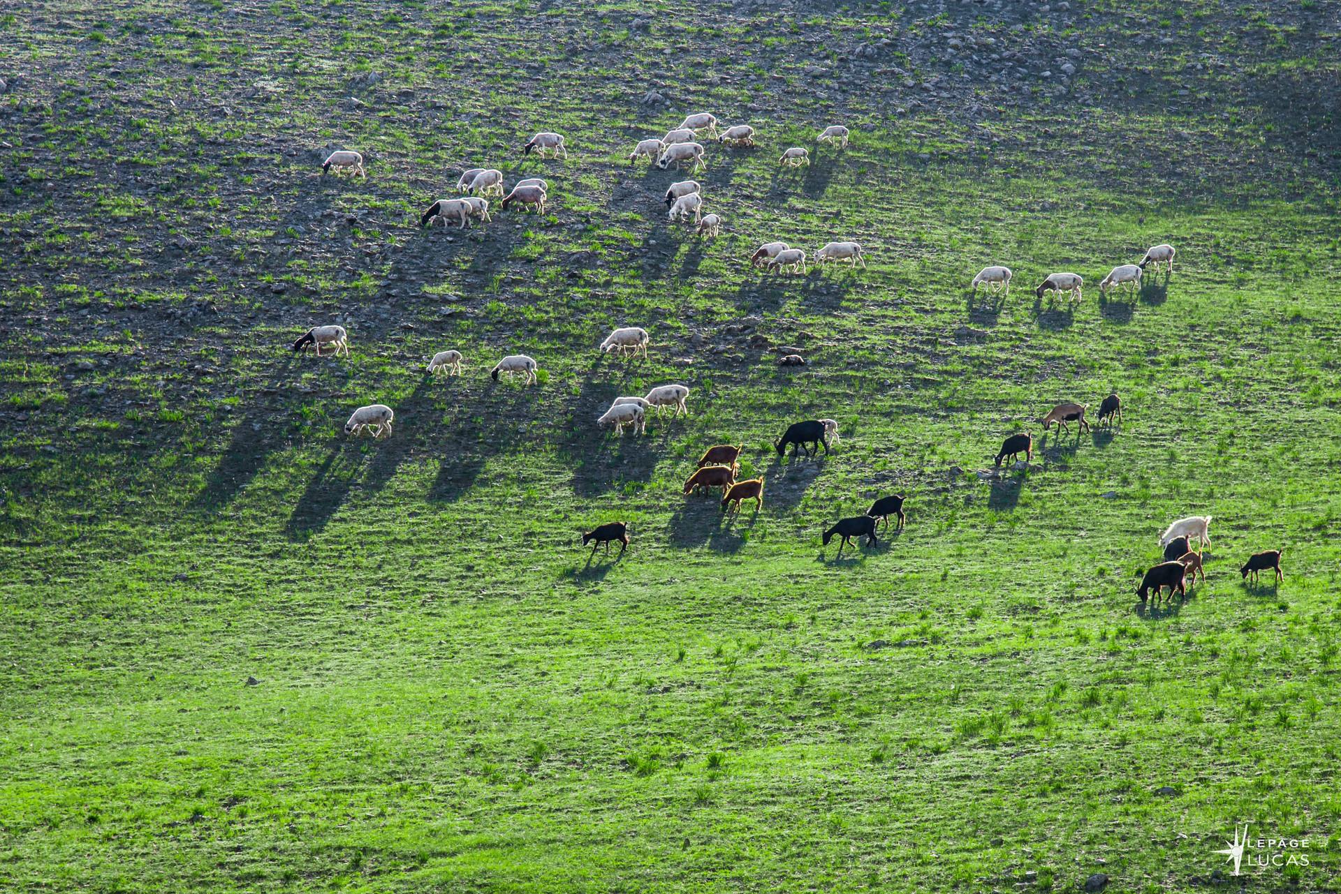Mongolie-85.jpg
