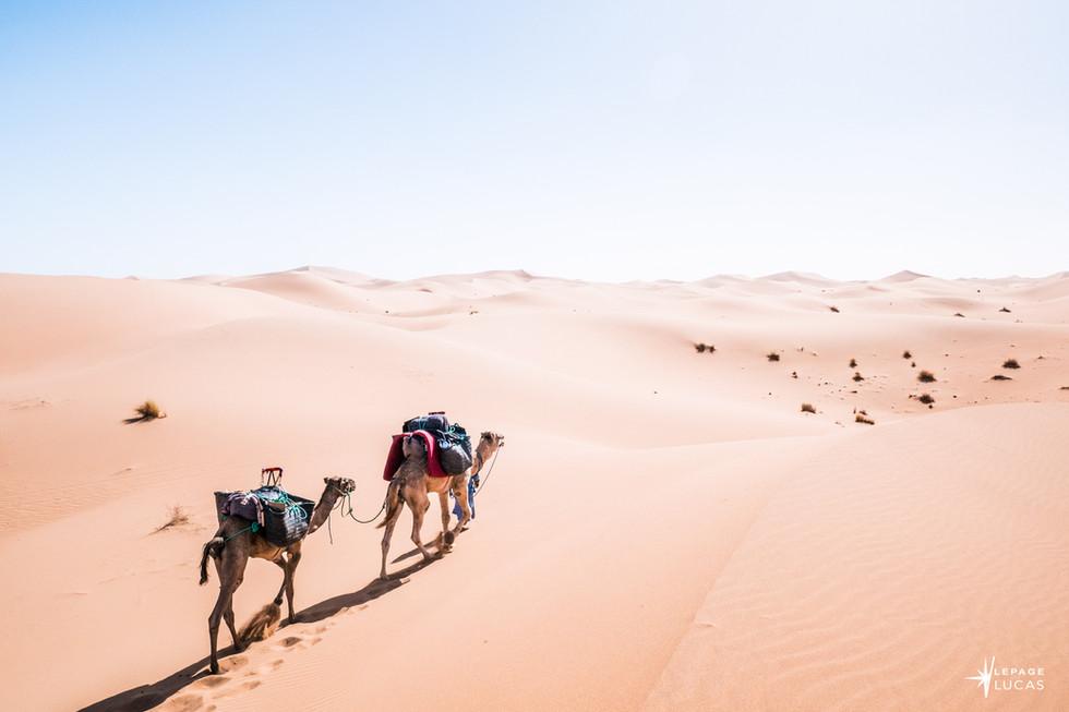 Sahara-31.jpg