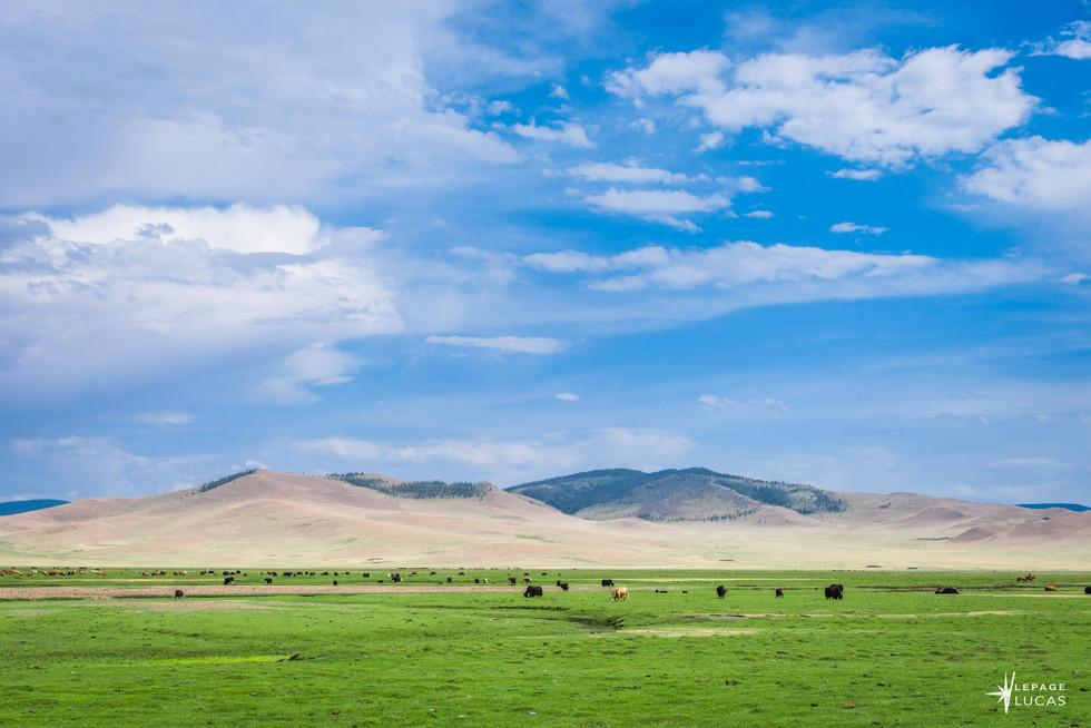 Mongolie-65.jpg