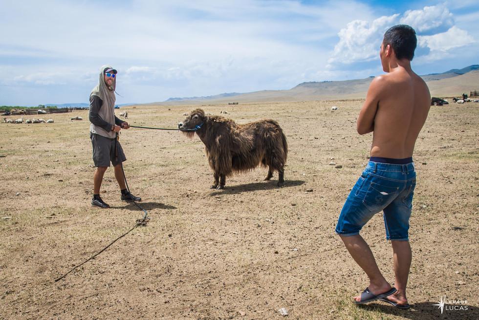 Mongolie-61.jpg