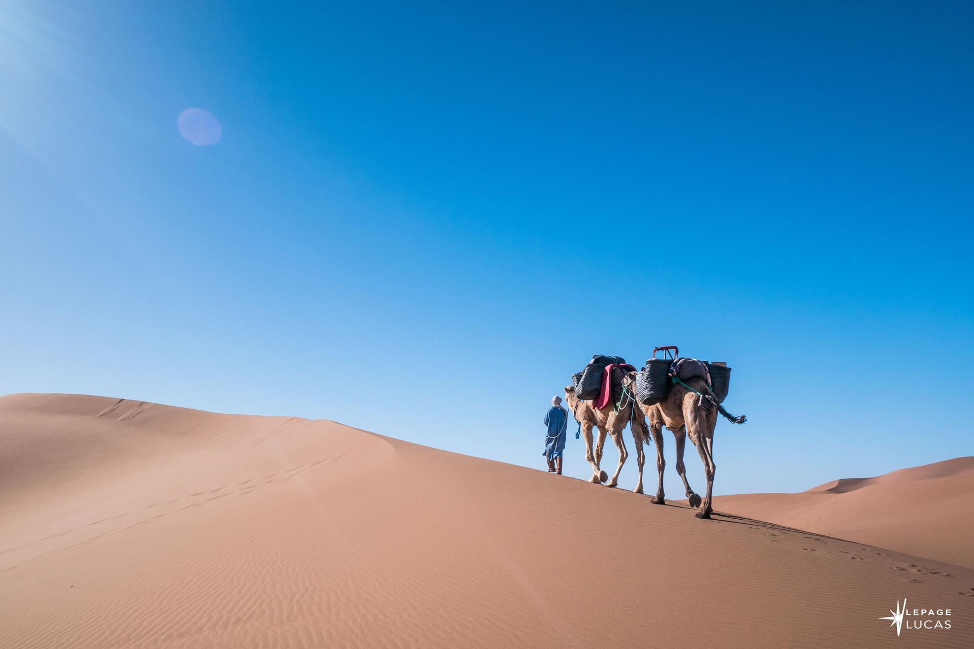 Sahara-26.jpg