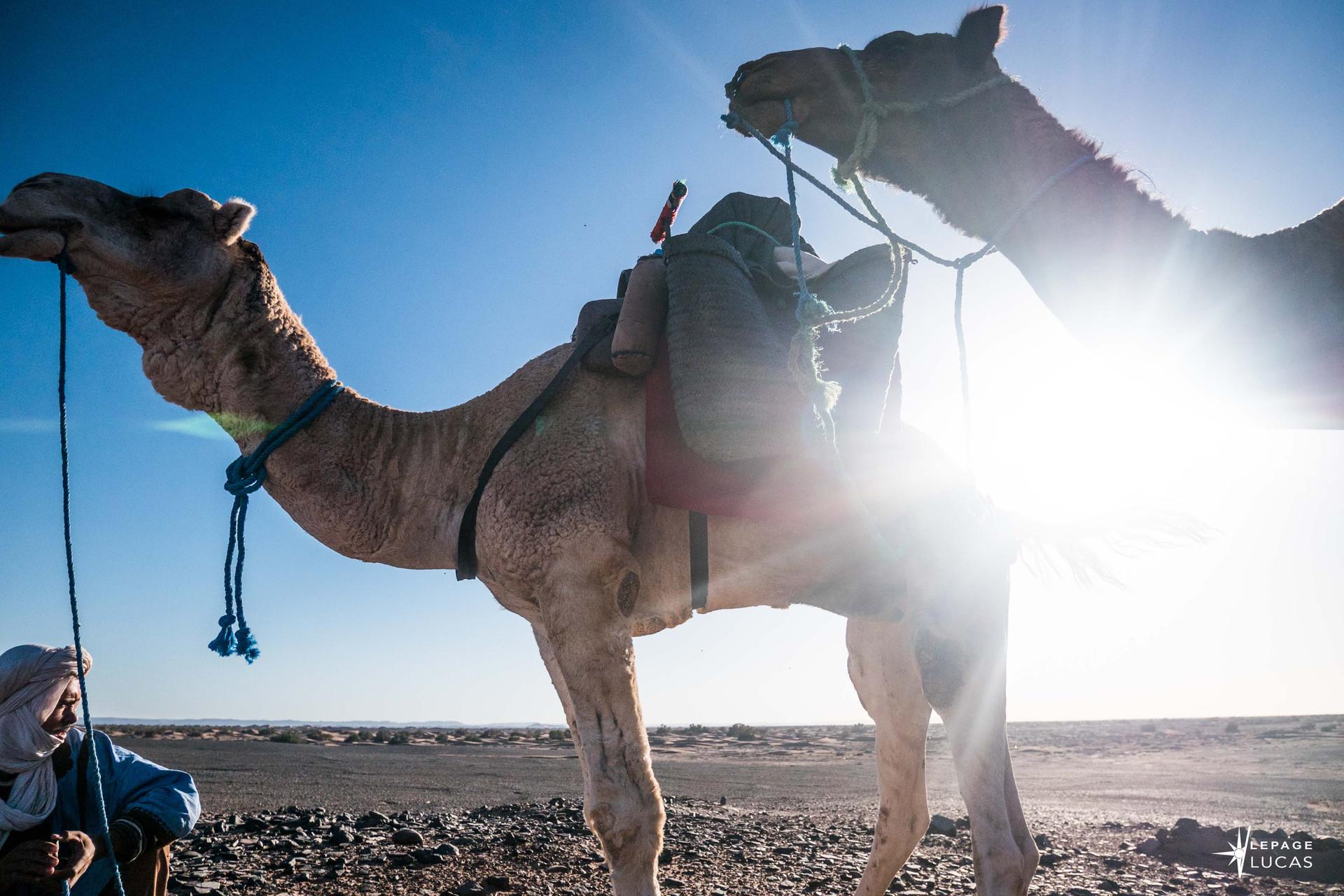 Sahara-36.jpg