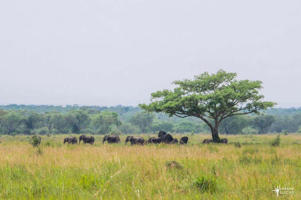 Afrique-9.jpg