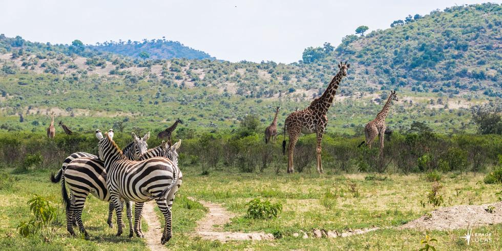 Afrique-46.jpg