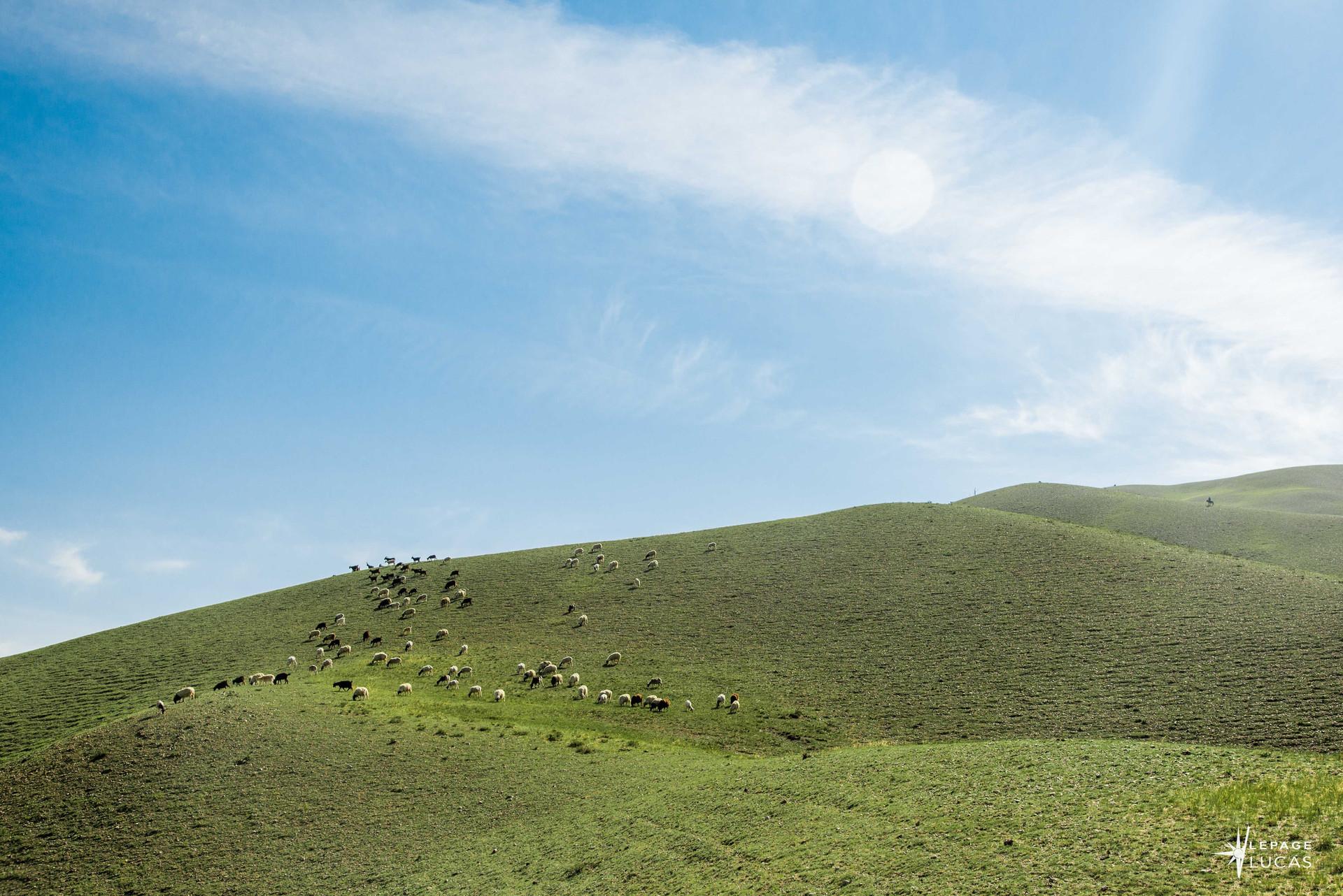 Mongolie-27.jpg