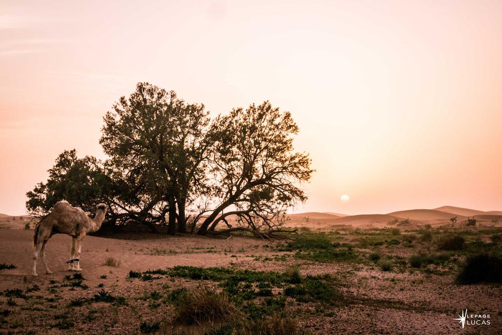 Sahara-35.jpg