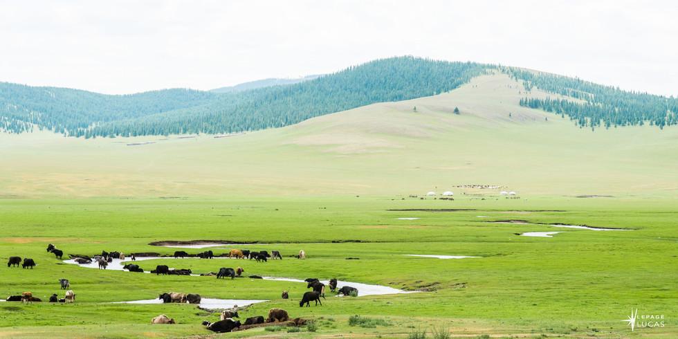 Mongolie-71.jpg