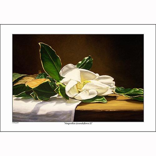 """""""Magnolia Grandiflora II"""""""
