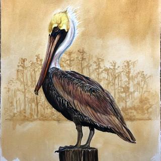 """""""Brown Pelican (Pelecanus occidentalis)"""""""