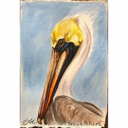 """Brown Pelican"""