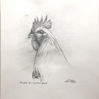 """""""Rooster of a fightin' stock"""""""